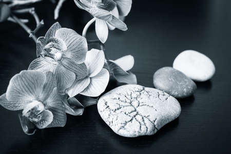 black stones: Spa massage stones and orchids flowers as a background. Black and white