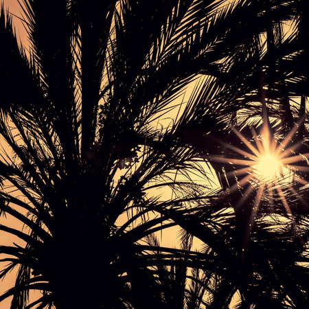 bright sky: Dark silhouettes of date palms against bright colorful sky with sunrays seen through the leaves