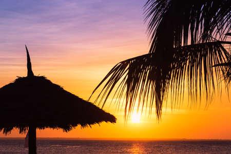 Silhouettes sombres de cocotiers et le parasol au coucher du soleil contre ciel coloré sous les tropiques