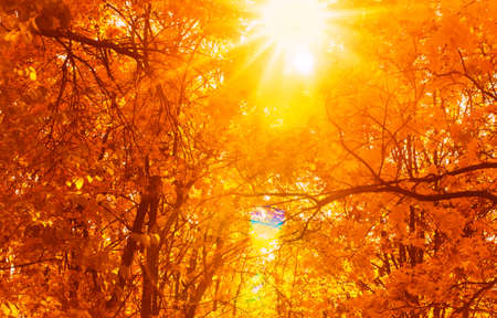 Sun rays seen through tree brances in autumn park. Fall concept. Beautiful nature background