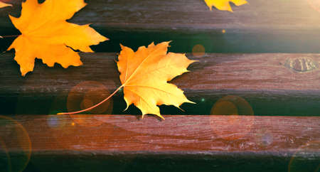 Yellow maple leaves on wooden bench. Autumn concept. Fall background