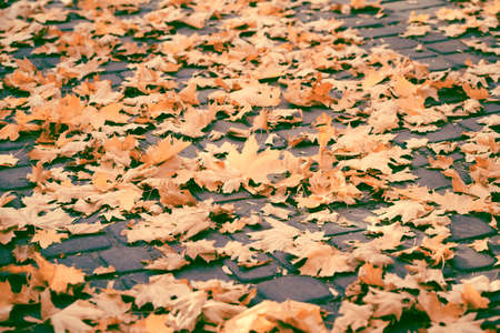 Autumn yellow leaves on the ground in the park. Fall concept. Beautiful nature background Reklamní fotografie