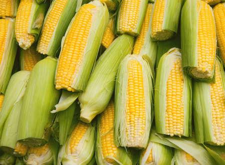 Verse rauwe gele maïs op de straatmarkt. Biologisch product geschikt voor vegetariërs en veganisten. Gezonde voeding concept achtergrond