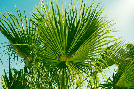 Palm tree leaf close up. Beautiful nature bakground for posters, blogs and web design.
