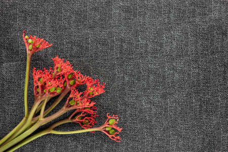 Red flower stalk on a black background. Florist collects flower bouquet. Shooting flowers. Banco de Imagens