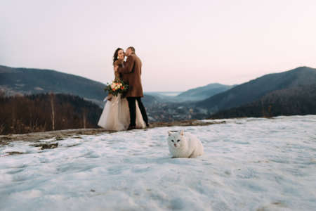 a white shorthair cat is sitting on the snow, a young couple in love kisses on the top of the mountain. Rest for the newlyweds after the wedding. Travel to the ski resort. Place for your text.