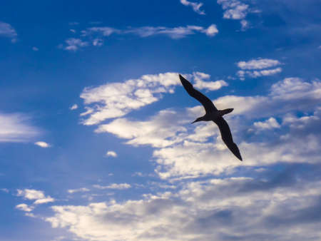 seabird in the sky