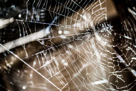 Macro close up of a spider web