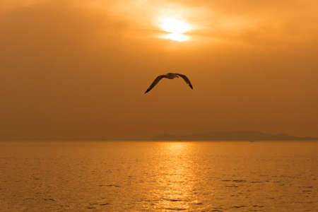 A seagull flying above the aegean ocean at sunset in Greece