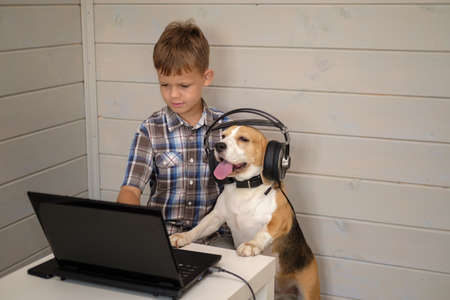funny dog Beagle in headphones with a microphone stands on his hind legs next to the boy and looks at the laptop screen Stockfoto