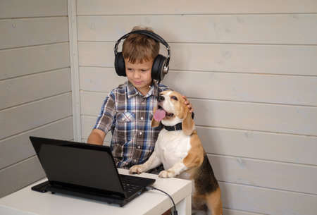 cute European boy with headphones and Beagle dog looking at the laptop screen. the boy plays computer games, communicates with the help of a video messenger