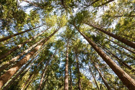 nature green: hermosos �rboles. bosque verde naturaleza.