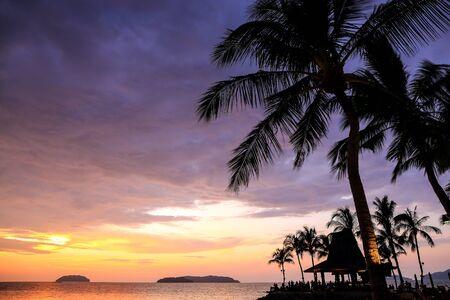 palm trees silhouette: Palm trees silhouette on sunset tropical beach