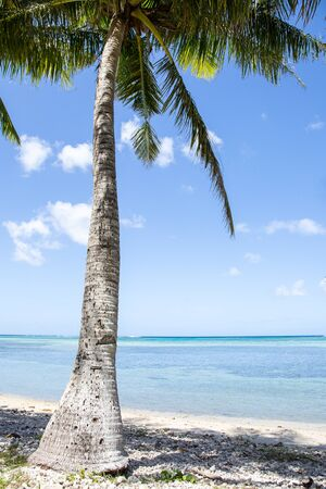Palm tree on a tropical beach. Stock Photo