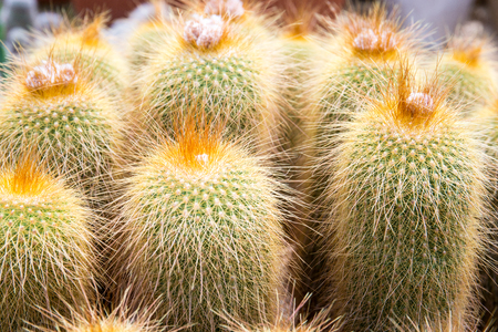 Cactus in a garden. Nature plant background.