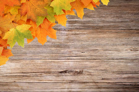 autumnal background, old wooden boards and wedge leaves