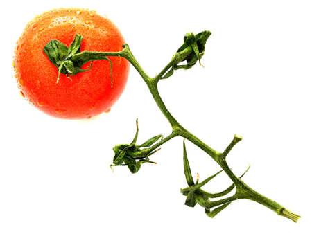 Isolated tomato closeup