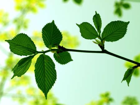 Green leafy branch