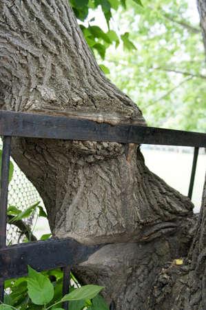 devouring: The tree devouring metal Stock Photo