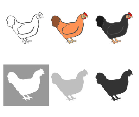 topknot: Poultry chicken, a set of six pieces. white, black, orange and silhouette. useful to store and farmer. Vector illustration Illustration