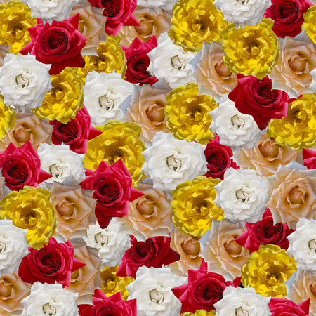 Seamless solid pattern of natural roses. red, white, yellow, beige. lie beside without a gap. Stok Fotoğraf