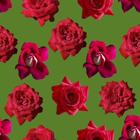 Seamless solid pattern of natural roses. Bright saturated color. For printing on paper and fabric.