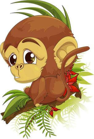 brimmed:  monkey Stock Photo