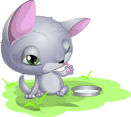 coccinellidae:  cat and milk
