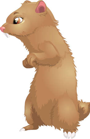 marmot: marmot Illustration
