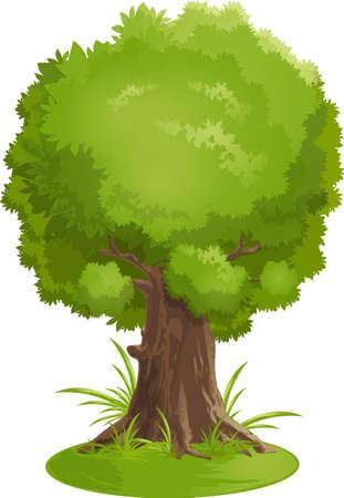 arboles frondosos: árbol Vectores