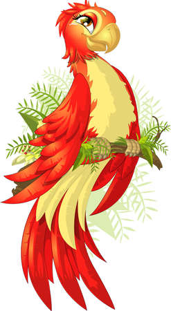 parrot illustration image Vector