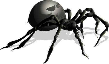 hairy legs: beautiful black spider on a white background