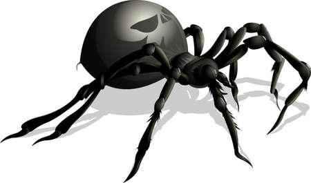 schöne schwarze Spinne auf einem weißen Hintergrund Vektorgrafik