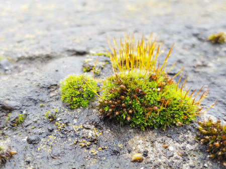 Green moss on a rock, in the approximate form