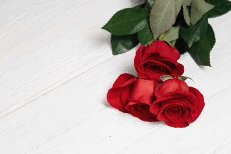 Bright red garden roses on white wooden background. Fresh summer floral background with copy space.