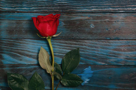Hermoso ramo de flores rosas rojas sobre fondo de madera azul antiguo, horizontal. Foto de archivo