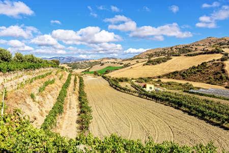 Field mountains sky vineyards Sardinia