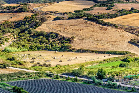 Sheep field meadow animal Sardinia