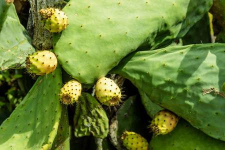 Cactus plant cactus plant Reklamní fotografie
