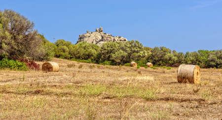 Meadow rocks plant bushes