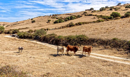 Cow animal donkey meadow path field