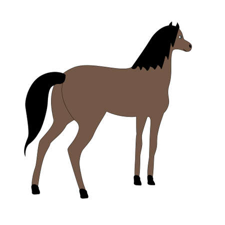Young horse brown suit isolated on a white background.