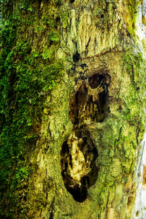 The tree trunk affected by the beetle bark beetle and its larvae.
