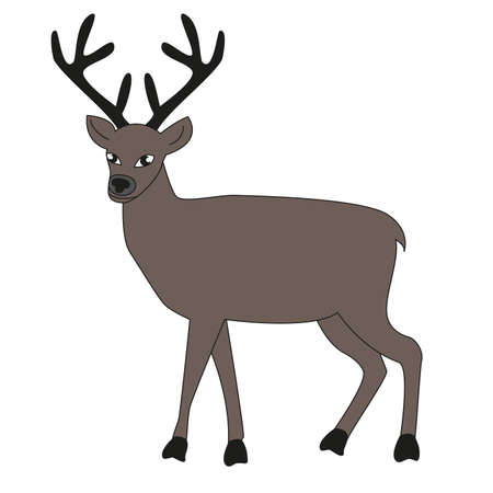 Adult male deer with big horns isolated white background. Illustration