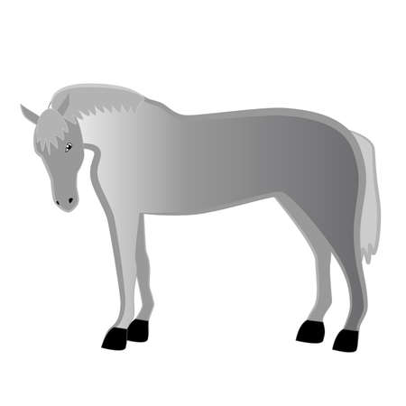 Gray young domestic horse isolated on white background.
