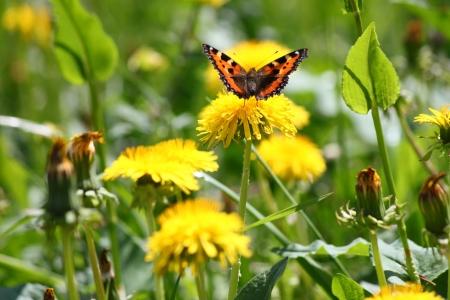 On the dandelion meadow Stock Photo