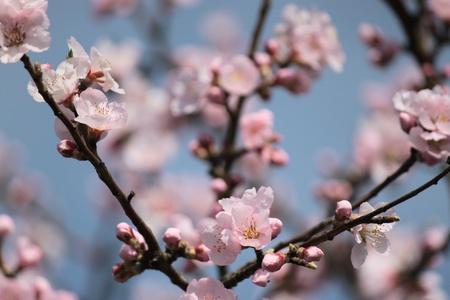 finite: Finite spring