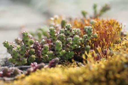 Wall-plant photo