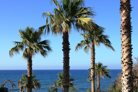 Palm trees by the sea