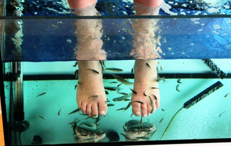 Fish Spa Stock Photo
